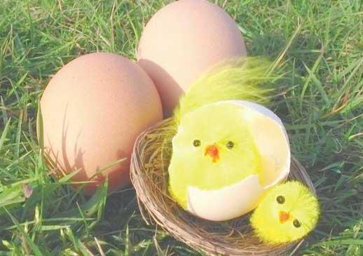 如何做好微分销:微信卖鸡案例分