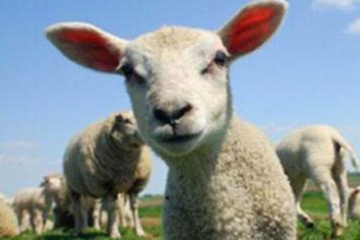 薅羊毛的最新玩法(支付宝10亿红包大多数被薅羊