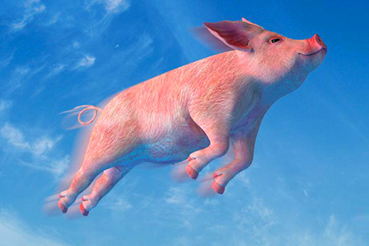 多少人渴望成为风口上的猪,却不小心成为案板上的肉