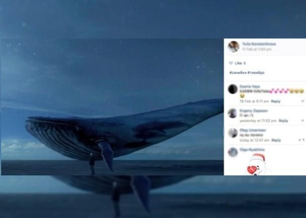 蓝鲸死亡游戏是什么(超级危险!千万别玩蓝鲸游戏)