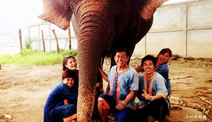 清迈大象保护营最全攻略整理