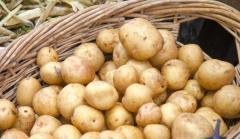 高中毕业生卖土豆 日赚10000元
