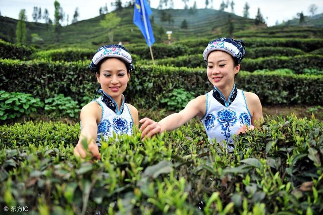 从卖茶叶,到卖茶树,到卖茶园的商业模式!