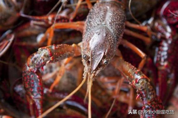 龙虾怎么洗简单又干净?你知道吗,其实用这2个工具即可 网络快讯 第1张