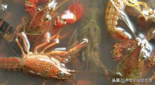 龙虾怎么洗简单又干净?你知道吗,其实用这2个工具即可 网络快讯 第3张
