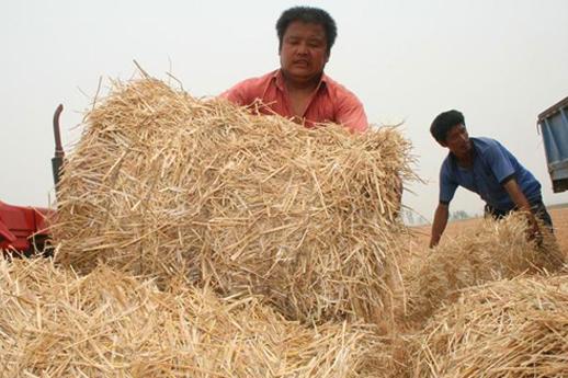 这农民利用农村废料1年赚100万 他的