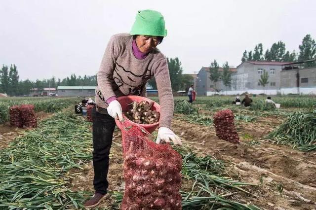 拼多多斥资百亿推广农产品