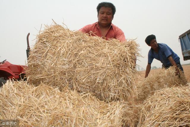这农民利用农村废料1年赚100万 他的赚钱方式有3种!