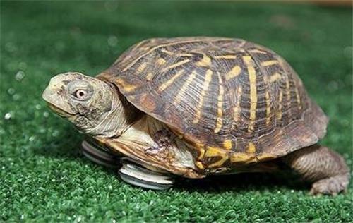 乌龟吃什么食物(不知道了赶紧进来了解下)