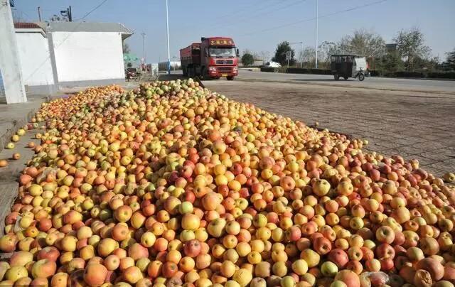 水果滞销几毛钱卖不出去,为什么不用电商卖到全国?原因很无奈