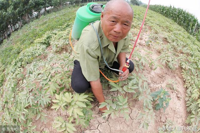 农村种什么赚钱,这几种作物风险小,利润高
