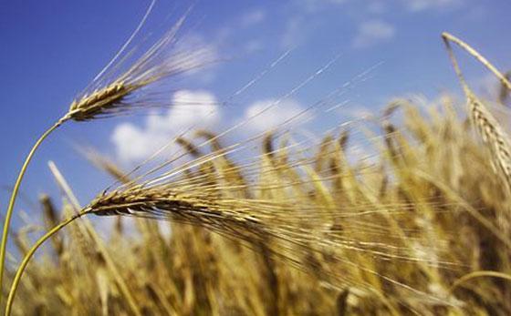 五谷杂粮指的是什么,五谷杂粮养生配方