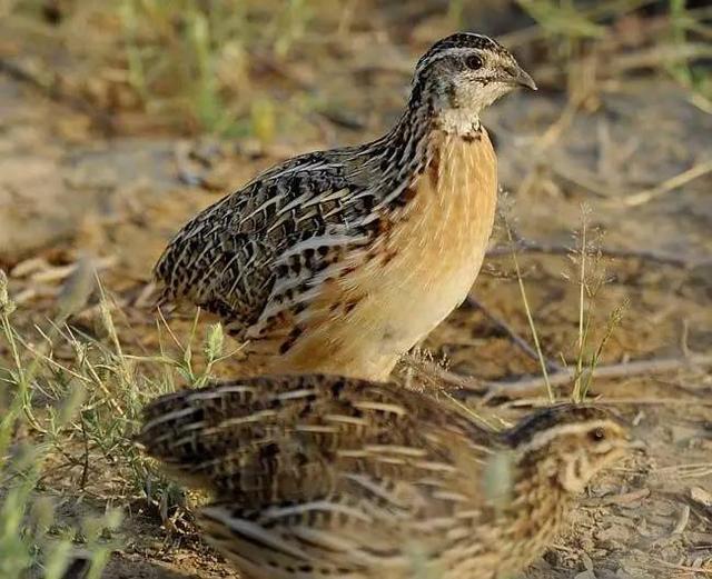 这些鸟的名字你都能念对吗?