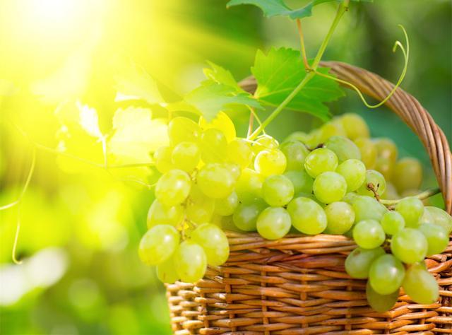 提子和葡萄的区别只是价格贵了点吗?你错了!