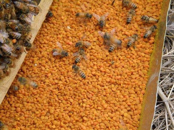 花粉过敏怎么办?享受春天有妙招