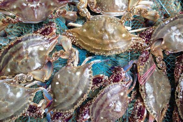 熟海蟹怎么保存 熟海蟹能保存多久