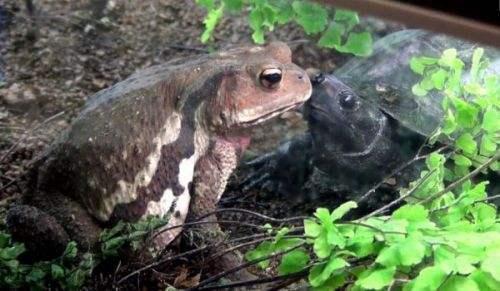 乌龟冬天怎么养?冬天家庭养龟须知!家养的乌龟如何安全过冬?