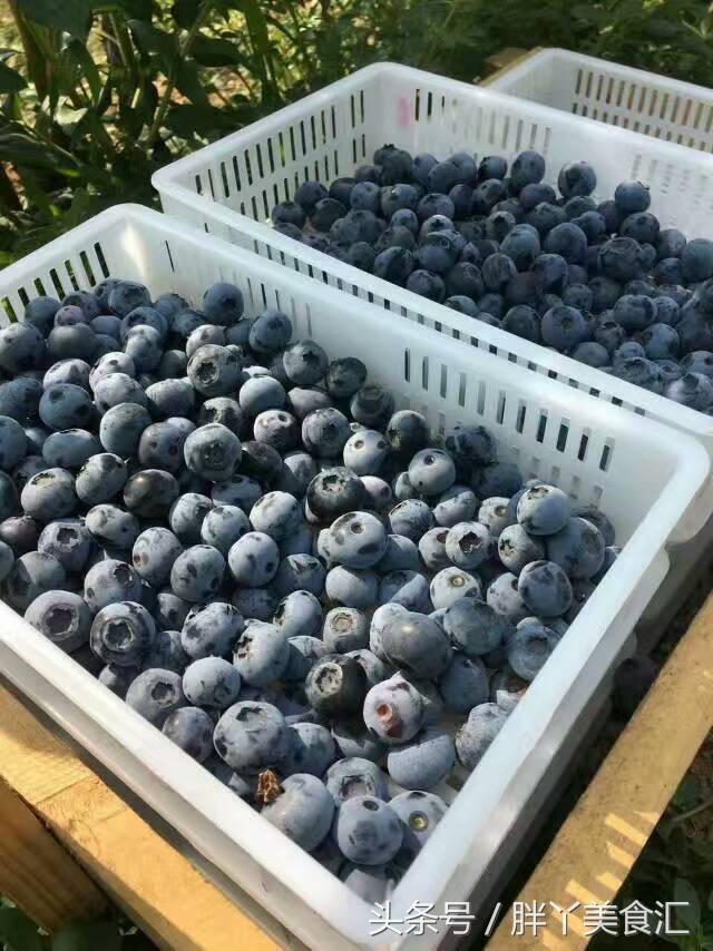 蓝莓的正确吃法,很可能以前你都吃错了