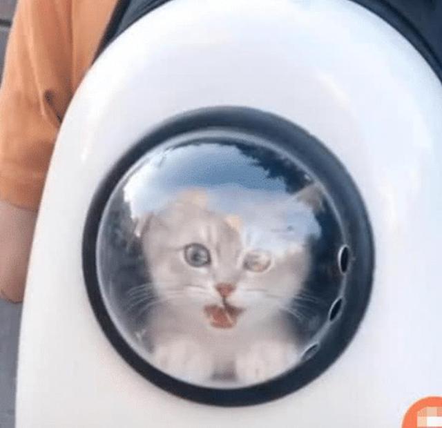"""抖音这只""""猫咪""""走红了,但""""铲屎官""""转身那一刻,网友:全都要"""