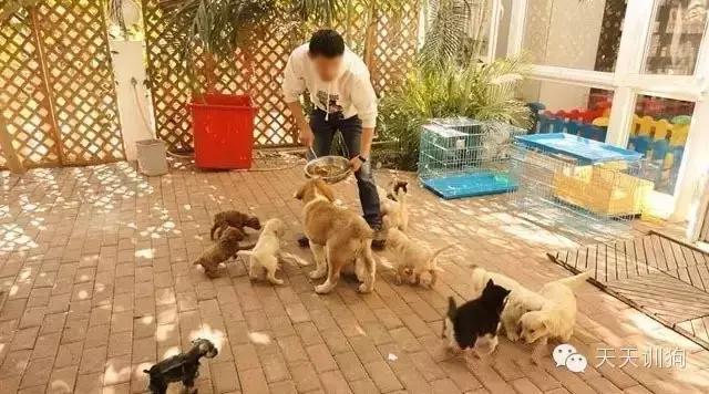 宠物狗去哪里买比较好,我来告诉你