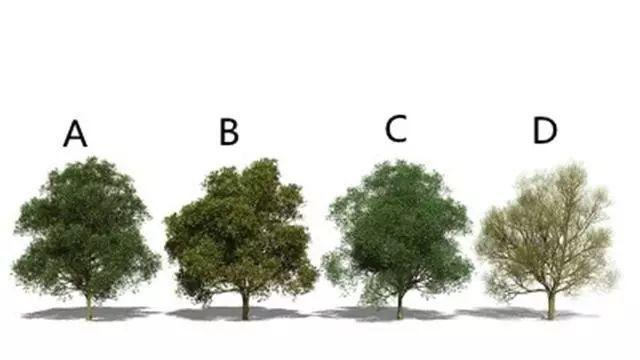 「测试」凭感觉选一棵树种下,测你这辈子有啥好命