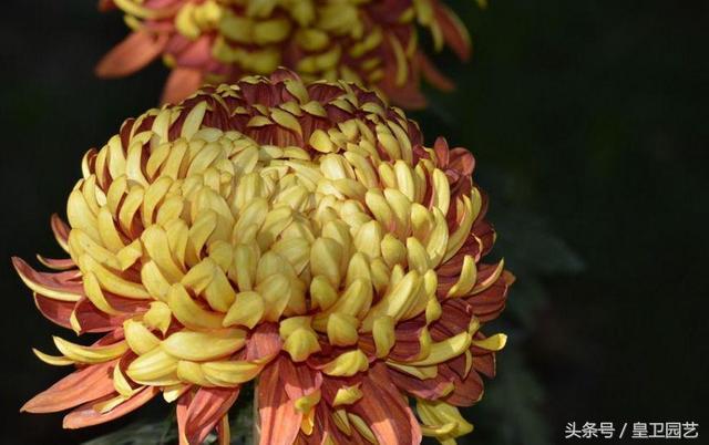 揭秘中国的国花是什么