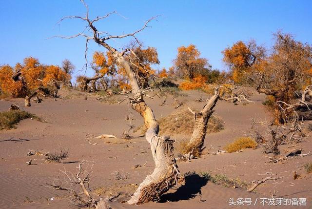 中国最大的沙漠是哪里解读,了解中国最大的沙漠是哪里!