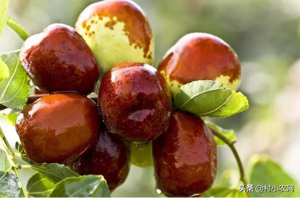 秋季很多水果都会采收上市,那么你知道秋天成熟水果都有哪些吗?