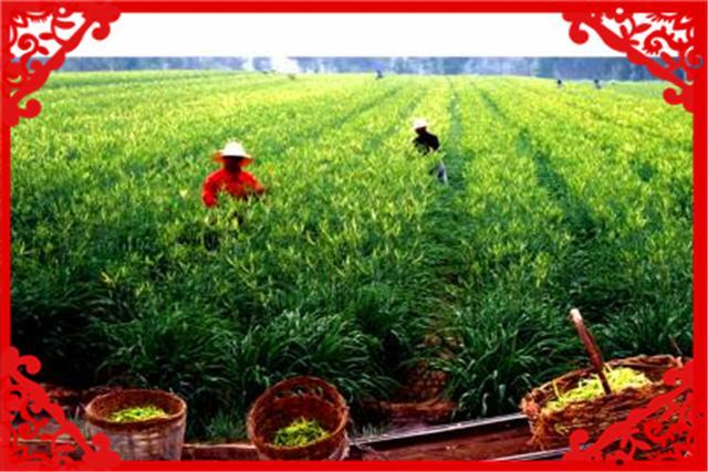 目前农村种植什么最有前景、比较赚钱呢?这几种都不错,建议考察