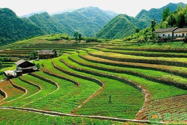 农村一亩地等于多少平方米?农村土地单位换算小技巧