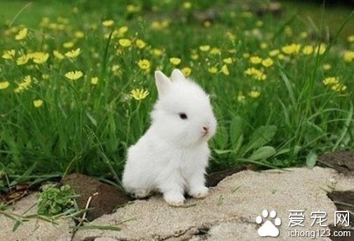 兔子拉稀 兔子拉稀的正确解决办法